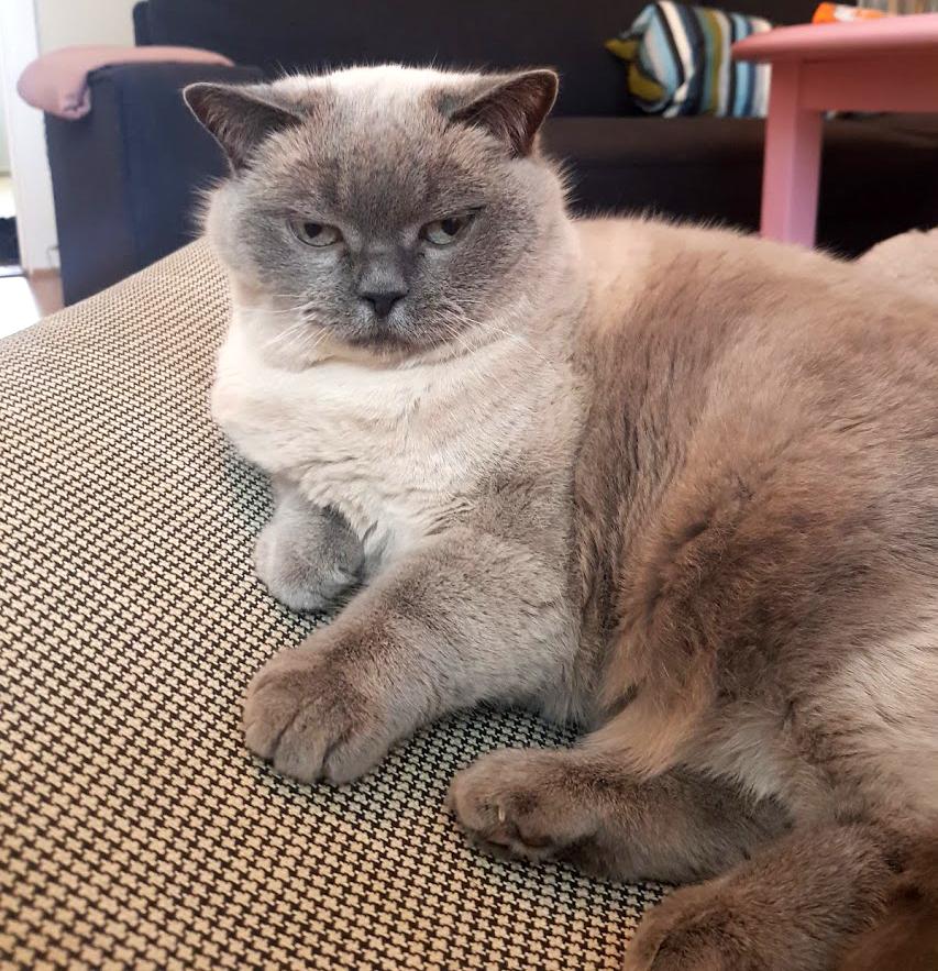 Katten Bisma